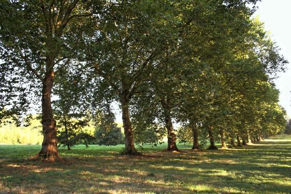 Arboretum de Chevreloup